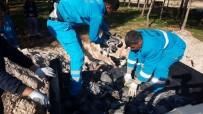 ÜÇPıNAR - Kuş ölümleri halkı tedirgin ediyor