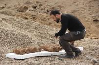 KANLıCA - Toprağa Gömülü Halde 10 Top Mermisi Bulundu