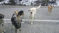 SOKAK KÖPEKLERİ - Tosya'da Başıboş Geçen Sokak Köpekleri, Tehlike Saçıyor