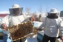 Arıların Karla Mücadelesi