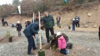 KıZıLDERE - Emet , Hisarcık Ve Çavdarhisar'da 12 Bin 817 Fidan Toprakla Buluştu