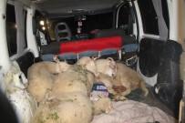 Hayvan Hırsızları Yakalandı