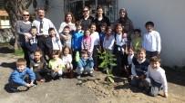 Burhaniye'de Minikler Velileriyle Birlikte Ağaç Dikti