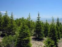 BAKANLIK - Eskişehir'de Yıl Sonuna Kadar 19 Bin 748 Dekar Alanda Ağaçlandırma Çalışması Yapılacak