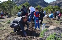 Osmancık'ta Ana Okulu Öğrencileri Fidan Dikti