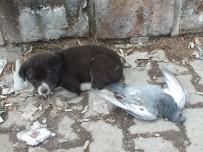 SOKAK KÖPEĞİ - Sokak Köpeği Donan Güvercini Yalnız Bırakmadı