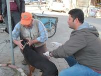 MUSTAFA TEMIZ - Biga'da Av Köpekleri Aşılandı