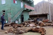 Çobanın İlgilenmediği 20 Büyükbaş Hayvan Telef Oldu