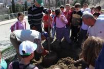İLKÖĞRETİM OKULU - Orman Haftası Vezirhan'da Ağaç Dikilerek Kutlandı