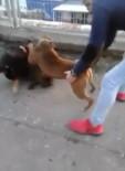 KÖPEK DÖVÜŞÜ - Köpekleri Dövüştürdüler, Bir De Kameraya Kaydettiler
