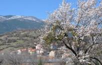 Baharın Müjdecisi Bademler Çiçek Açtı