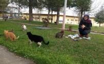 SOKAK KEDİSİ - Devlet Bursuyla Sahipsiz Kedilere Bakıyor