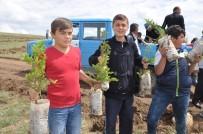 MUSTAFA ALTıNPıNAR - Sorgun'da Bin 500 Fidan Toprakla Buluştu