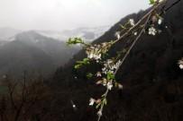 KAR YAĞıŞı - Giresun'da Kış Ve Bahar Bir Arada