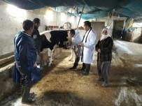 SAĞLIK TARAMASI - Hayvanlar İçin Sağlık Taraması