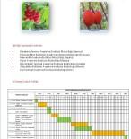 ORMAN BAKANLIĞI - İBB Unutulmaya Yüz Tutmuş Meyveleri Gün Yüzüne Çıkarıyor