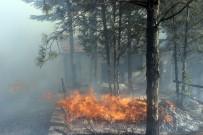 İTFAİYE ERİ - Anız Yangını Ormanlık Alanı Kül Etti
