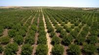Artvin'de Bir Yılda 3 Milyon 36 Bin Adet Fidan Toprakla Buluştu