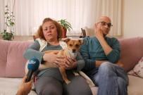 HAKARET DAVASI - Evde Beslenilen Köpek Komşuları Birbirine Düşürdü