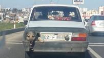 KÖPEK - Stop lambası yerine köpek kafası