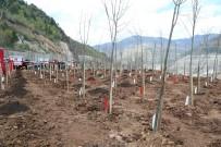 Artvin'de 15 Temmuz Şehitleri Hatıra Ormanı Kuruldu