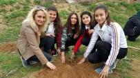 ANADOLU LİSESİ - Fidanlar, Daha Yeşil Bir Okul İçin Dikildi