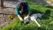 KÖPEK - Mehmetçik, Sınırdaki Yaralı Köpeği Kurtardı