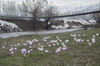 MUNZUR VADİSİ - Munzur Vadisi'ne Bahar Geldi, Çiçekler Açtı