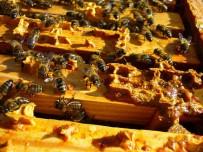 PROPOLIS - 'Arıları Koruyan Propolis Şimdi De İnsanları Koruyacak'