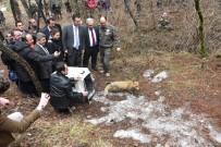 KUŞ YUVASI - Kızılcahamam'da Tedavileri Yapılan Yaban Hayvanları Doğaya Bırakıldı