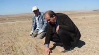 ABDULLAH ÇELIK - Konya Ovasında Buğdaylar Yeşermeye Başladı