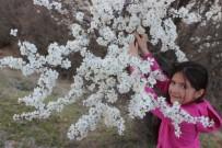 Ağaçlar Çiçekler Açtı
