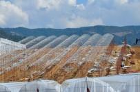NURULLAH KAYA - Sebze Meyve İhracatındaki Kriz, Muz Üreticisine Yaradı