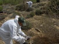 FEROMON - Mersin'de Orman Zararlılarıyla Mücadele Çalışmalarına Başlandı