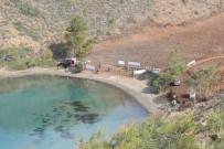 ORMAN ALANI - Marmaris'te  Yanan 460 Dönüm Alana 5 Milyon Tohum Ekildi