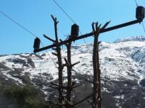 ELEKTRİK DİREĞİ - Çam Ağacı Elektrik Direği Oldu
