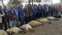 ABDULLAH ERIN - Deprem Bölgesinde Kurbanlar Kesildi