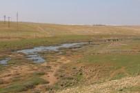 CEYLANPINAR - Suriyelilerin Barındığı Çadırkentin Atık Suyu İle İlgili İnceleme Başlatıldı