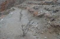 Artvin'de 3 Bin 480 Dekar Orman Alanı Orman Köylüsünün Hizmetinde