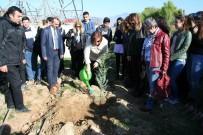 SONBAHAR - Kıbrıs'ta Yapılan Uluslararası Kongrenin Karbon Ayak İzini Aydın'da Sıfırlandı