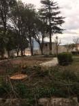 Milas'ya Yine Yüzyıllık Ağaç Kesildi
