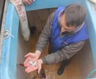 Artvin'den Dünyaya Balık İhracatı