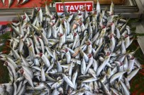Balıkçıların Umudu 1 Eylül'e Kaldı
