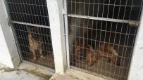 BENGAL - İstanbul'da Bir Çiftlikte Ele Geçirildiler!