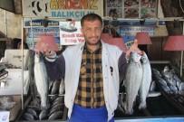 Kilis'te Balık Satışlarında Son Haftaya Girildi