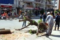 AĞAÇ KESİMİ - Salihli'de, Cadde Düzenlemesinde Ağaçlar Kesildi