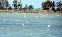 PELIKAN - Aliağa Kuş Cennetinde Kartpostallık Görüntüler
