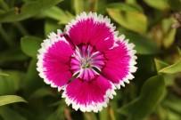 Anadolu'ya Özgü Bitkiler Koruma Altında