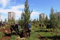 EKOLOJIK - Bağlar Belediyesinden Yeni Yeşil Alanlar