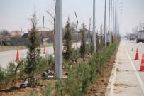 Karaman Belediyesi'nin Hedefi 30 Bin Fidan Dikmek